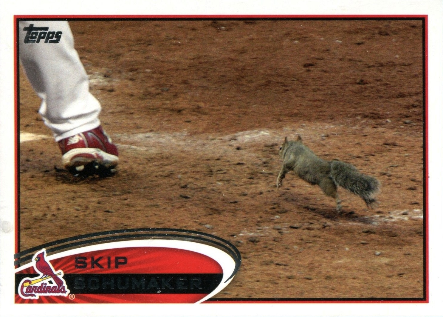RallySquirrel